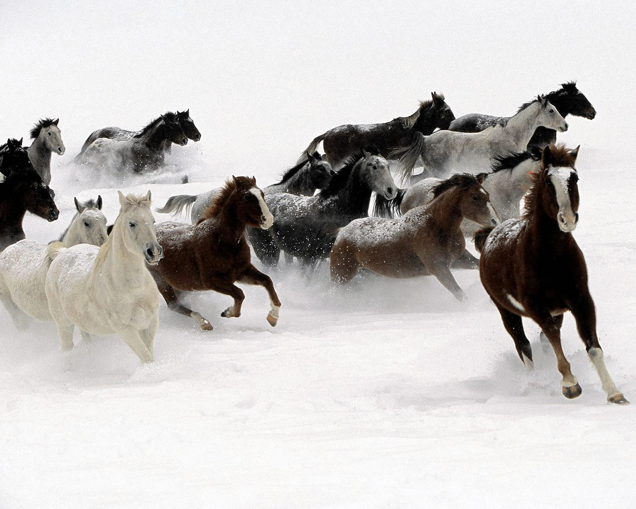 Great Wallpaper Horse National Geographic - galloping-horse-wallpaper  Gallery_604334.jpg