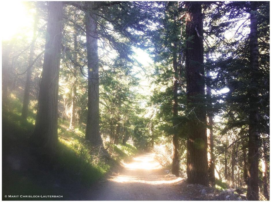 Hike_Road