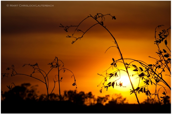 Sunset_plants