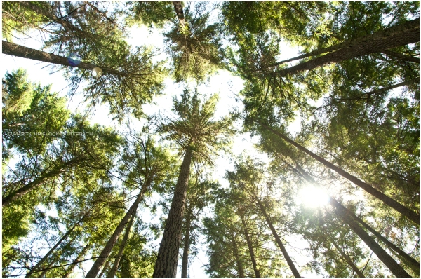 blog_grand_forrest_treest